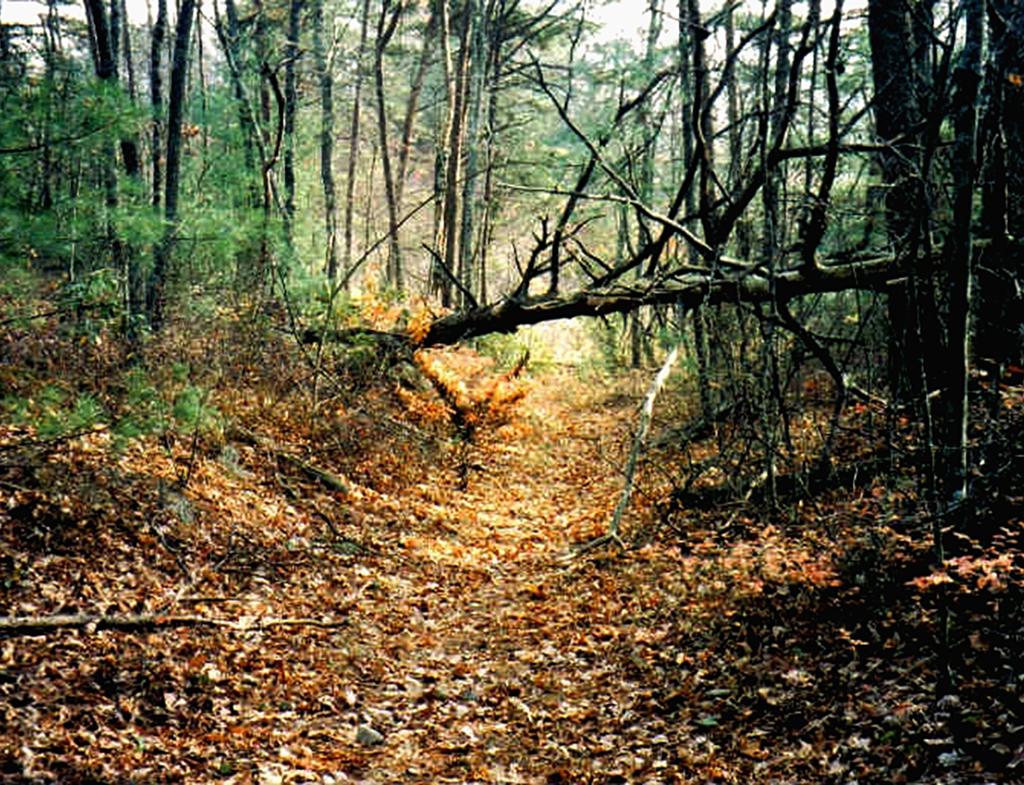 Unicoi-Turnpike-Trail_